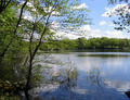 Image of Protect Our Reservoir - Preserve Pine Grove
